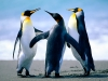 Ocean reserve: Marine Mania
