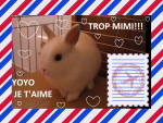 yoyo2 - Male Dwarf rabbit (Other)