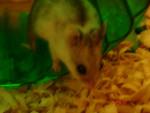 Ezzy - Hamster (3 years)