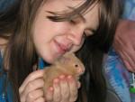 Caramel - Male Hamster
