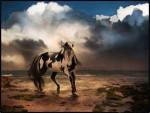 wild - Male Horse