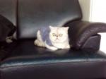 Kitty - (3 years)