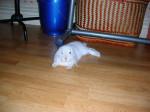 Nuage - Rabbit (4 months)